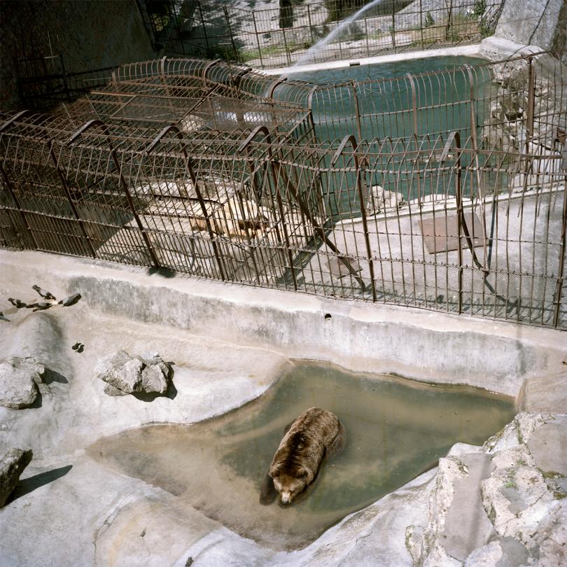Belgrade Zoo. Serbia. The memories of my mother throwing an ice cream into the bear enclosure in 1990. The poor animals fighting over it. My role model.